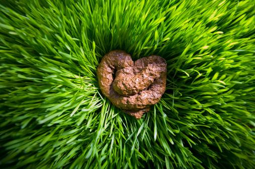 Heart shape poop on grass.